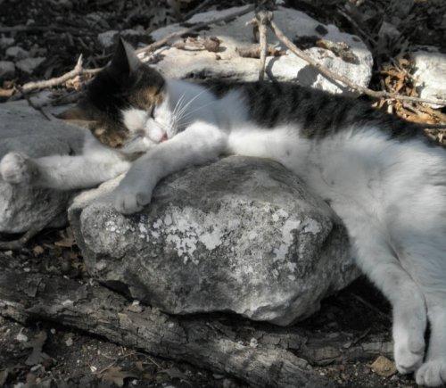 tabby asleep outdoors3