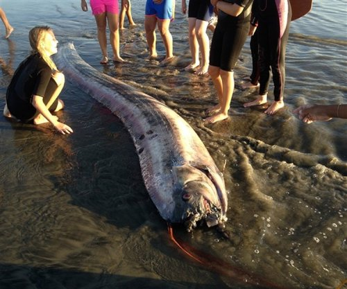 This ominous portent from California last week:  Giant oarfish washed up on the beach.  Second one since I-don't-know-when.
