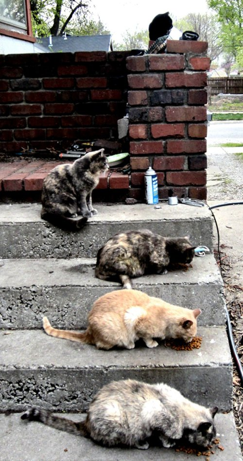 These are the outdoor cats tended by jeanne's family a few blocks away.  Note the cat with the pliers and spray lubricant waits patiently while those lower three hang around being useless eaters.  The top cat [above] knows all this but doesn't care so long as the work gets done by the worker cat.  It's all factored in, and the lower three cats are relatives.