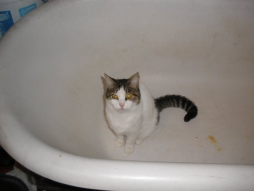 Shiva in bathtub